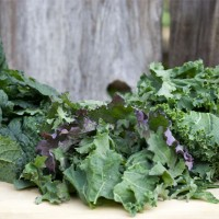 In Defense of Kale